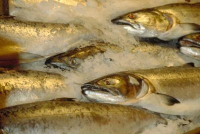 Storing Seafood